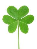 Πράσινο τριφύλλι στοκ εικόνα με δικαίωμα ελεύθερης χρήσης