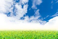 Πράσινο τριφύλλι και κίτρινο άνθος κάτω από τον τέλειο μπλε ουρανό _ Στοκ Φωτογραφία
