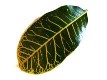 Πράσινο τροπικό λουλούδι με έναν συνδυασμό χρωμάτων στοκ εικόνα με δικαίωμα ελεύθερης χρήσης