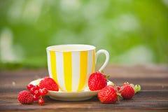 Πράσινο τσάι στο όμορφο φλυτζάνι Στοκ εικόνες με δικαίωμα ελεύθερης χρήσης