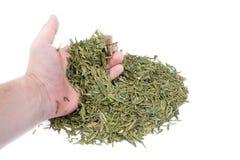 πράσινο τσάι χεριών στοκ εικόνες με δικαίωμα ελεύθερης χρήσης