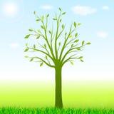 Πράσινο υπόβαθρο άνοιξη με το δέντρο και τη χλόη Στοκ Φωτογραφίες