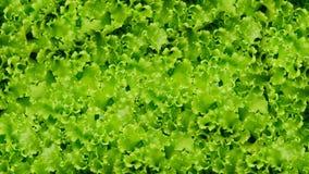 Πράσινο υπόβαθρο λαχανικών σαλάτας κατανάλωση υγιής Στοκ Εικόνα