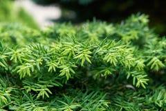 Πράσινο υπόβαθρο βλάστησης στοκ εικόνα με δικαίωμα ελεύθερης χρήσης