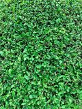 Πράσινο υπόβαθρο δέντρων στοκ φωτογραφία με δικαίωμα ελεύθερης χρήσης
