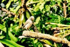 Πράσινο υπόβαθρο δέντρων φύσης νερού ποταμού πουλιών γλυκό στοκ φωτογραφία με δικαίωμα ελεύθερης χρήσης