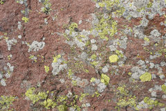 Πράσινο υπόβαθρο λειχήνων στην πέτρα Στοκ εικόνα με δικαίωμα ελεύθερης χρήσης