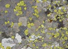 Πράσινο υπόβαθρο λειχήνων στην πέτρα Στοκ Εικόνες
