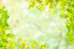 Πράσινο υπόβαθρο θαμπάδων Στοκ φωτογραφίες με δικαίωμα ελεύθερης χρήσης