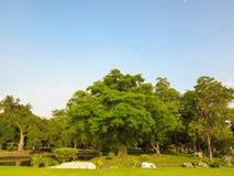 Πράσινο υπόβαθρο κήπων δέντρων Στοκ Φωτογραφία