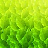 Πράσινο υπόβαθρο με το διαφορετικό σχέδιο φύλλων Στοκ Φωτογραφίες