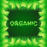 Πράσινο υπόβαθρο με το κείμενο που γίνεται από τα φύλλα οργανικά Απεικόνιση με τις φυτικές χλόες και τα διακοσμητικά σύνορα Στοκ Φωτογραφία