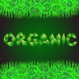 Πράσινο υπόβαθρο με το κείμενο που γίνεται από τα φύλλα οργανικά Απεικόνιση με τις φυτικές χλόες Στοκ Εικόνες