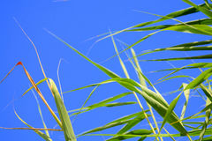 Πράσινο υπόβαθρο μπλε ουρανού φύλλων Στοκ Φωτογραφίες