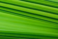 Πράσινο υπόβαθρο σύστασης φύλλων φοινίκων ` s στοκ εικόνες με δικαίωμα ελεύθερης χρήσης