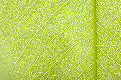 Πράσινη σύσταση φύλλων Στοκ φωτογραφία με δικαίωμα ελεύθερης χρήσης