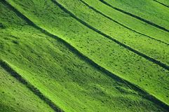 Πράσινο υπόβαθρο τομέων, θέμα άνοιξη Στοκ φωτογραφία με δικαίωμα ελεύθερης χρήσης