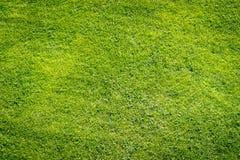 Πράσινο υπόβαθρο τομέων χλόης, σύσταση, σχέδιο Στοκ φωτογραφίες με δικαίωμα ελεύθερης χρήσης