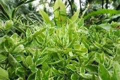 Πράσινο υπόβαθρο των εγκαταστάσεων επίγειας κάλυψης το φθινόπωρο χρωματίζει την άνευ ραφής σύσταση προτύπων φύλλων Στοκ Φωτογραφία