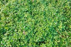 Πράσινο υπόβαθρο των εγκαταστάσεων επίγειας κάλυψης το φθινόπωρο χρωματίζει την άνευ ραφής σύσταση προτύπων φύλλων Στοκ Εικόνα