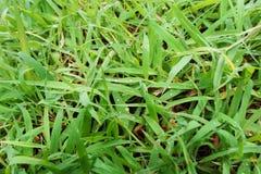 Πράσινο υπόβαθρο των εγκαταστάσεων επίγειας κάλυψης το φθινόπωρο χρωματίζει την άνευ ραφής σύσταση προτύπων φύλλων Στοκ Εικόνες
