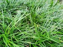 Πράσινο υπόβαθρο των εγκαταστάσεων επίγειας κάλυψης το φθινόπωρο χρωματίζει την άνευ ραφής σύσταση προτύπων φύλλων Στοκ εικόνα με δικαίωμα ελεύθερης χρήσης