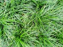Πράσινο υπόβαθρο των εγκαταστάσεων επίγειας κάλυψης το φθινόπωρο χρωματίζει την άνευ ραφής σύσταση προτύπων φύλλων Στοκ φωτογραφία με δικαίωμα ελεύθερης χρήσης
