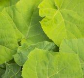 Πράσινο υπόβαθρο των φρέσκων φύλλων στοκ εικόνες με δικαίωμα ελεύθερης χρήσης