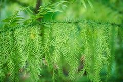 Πράσινο υπόβαθρο φυλλώματος, τροπικά φύλλα ζουγκλών Στοκ Εικόνα