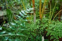 Πράσινο υπόβαθρο φυλλώματος φοινικών, τροπικά φύλλα ζουγκλών Στοκ Φωτογραφίες