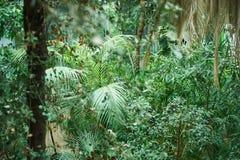 Πράσινο υπόβαθρο φυλλώματος φοινικών, τροπικά φύλλα ζουγκλών Στοκ φωτογραφίες με δικαίωμα ελεύθερης χρήσης