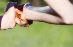 πράσινο υπόβαθρο φωτός του ήλιου χεριών πεταλούδων ανθρώπινο Στοκ Εικόνες