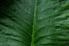 Πράσινο υπόβαθρο φύλλων και στάλαγμα στο σκοτεινό τόνο στοκ φωτογραφία