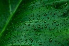 Πράσινο υπόβαθρο φύλλων και στάλαγμα στο σκοτεινό τόνο στοκ εικόνα με δικαίωμα ελεύθερης χρήσης