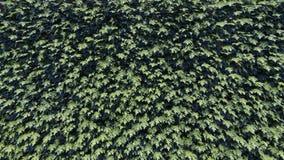 Πράσινο υπόβαθρο φύλλων/φυλλώματος απόθεμα βίντεο