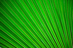 Πράσινο υπόβαθρο φύλλων Στοκ εικόνα με δικαίωμα ελεύθερης χρήσης