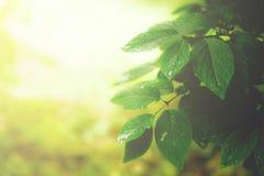 Πράσινο υπόβαθρο φύλλων Στοκ φωτογραφίες με δικαίωμα ελεύθερης χρήσης