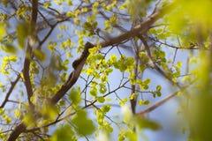Πράσινο υπόβαθρο φύλλων στοκ φωτογραφία με δικαίωμα ελεύθερης χρήσης