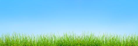 Πράσινο υπόβαθρο χλόης άνοιξη πέρα από τον ουρανό στοκ φωτογραφίες