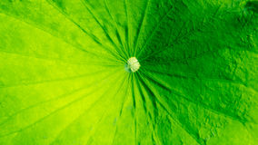Πράσινο υπόβαθρο χρώματος Στοκ Φωτογραφίες