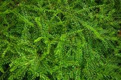 Πράσινο υπόβαθρο Στοκ φωτογραφίες με δικαίωμα ελεύθερης χρήσης