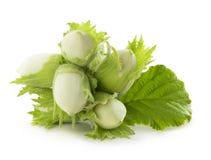 Πράσινο φουντούκι που απομονώνεται στο άσπρο υπόβαθρο στοκ φωτογραφία