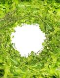 Πράσινο φρέσκο μίγμα χορταριών στο άσπρο ξύλινο υπόβαθρο, τοπ άποψη Στοκ εικόνα με δικαίωμα ελεύθερης χρήσης