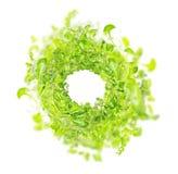 Πράσινο φρέσκο μίγμα χορταριών, τοπ άποψη στοκ εικόνα