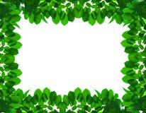 Πράσινο φρέσκο πλαίσιο φύλλων στοκ φωτογραφία