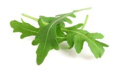 Πράσινο φρέσκο φύλλο rucola ή arugula που απομονώνεται στην άσπρη μακροεντολή υποβάθρου Στοκ Φωτογραφία