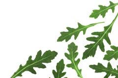 Πράσινο φρέσκο φύλλο rucola ή arugula που απομονώνεται στο άσπρο υπόβαθρο με το διάστημα αντιγράφων για το κείμενό σας Τοπ όψη Στοκ φωτογραφίες με δικαίωμα ελεύθερης χρήσης