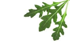 Πράσινο φρέσκο φύλλο rucola ή arugula που απομονώνεται στο άσπρο υπόβαθρο με το διάστημα αντιγράφων για το κείμενό σας Τοπ όψη Στοκ φωτογραφία με δικαίωμα ελεύθερης χρήσης