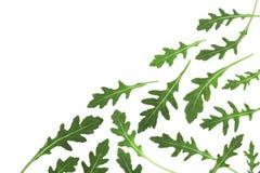 Πράσινο φρέσκο φύλλο rucola ή arugula που απομονώνεται στο άσπρο υπόβαθρο με το διάστημα αντιγράφων για το κείμενό σας Τοπ όψη Στοκ Εικόνες