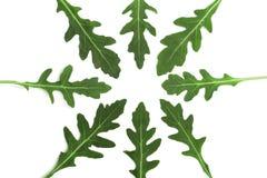 Πράσινο φρέσκο φύλλο rucola ή arugula που απομονώνεται στο άσπρο υπόβαθρο Τοπ όψη Επίπεδος βάλτε το σχέδιο Στοκ Εικόνες